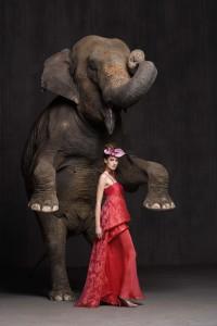 Pau pascual. elefant 1